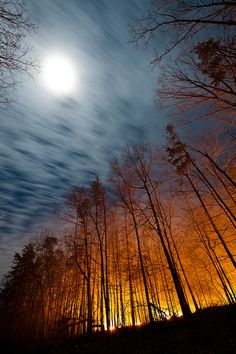 Full moon over illuminated forest, New Castle, Virginia