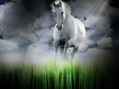 #letthehorsesrunwildandfree