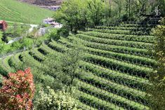 Continue reading Der Beitrag Die Proseccostraße: Von Conegliano nach Valdobbiadene erschien zuerst auf Alnis fescher Blog. Culinary Arts, Vineyard, Blog, Continue Reading, Outdoor, Beautiful, Northern Italy, Outdoors, Outdoor Life