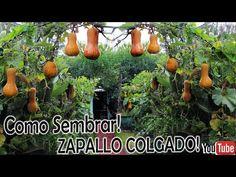 1ra. Parte// Como SEMBRAR ZAPALLO COLGADO!! CULTIVO en el AIRE! - YouTube Plantar, Pumpkin, Patio, Outdoor, Bingo, Youtube, Gardens, Medicine, Butternut Squash