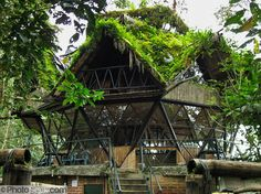 geodesic dome. tree house-esque. Had one in Alaska . This is a lot more than mine was but an experience I don't regret.!