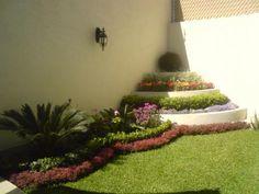 fotos.infoisinfo.com.mx colibri_jardineria 3015388_292266