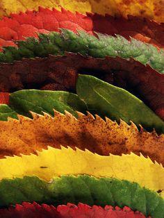 clothes of autumn by RetardSock.deviantart.com