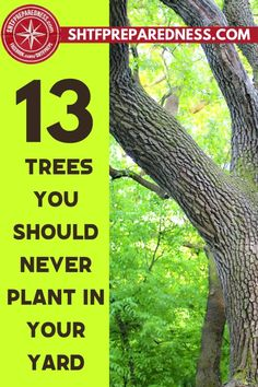 Here is a list of 13 trees that you should never plant in your yard. Most of us presume that having lots of trees near our house is good, but some trees come with their own set of problems for you and the buildings surrounding them. SHTF Preparedness wants to educate you about the right trees to plant in your home. Check it out here. #trees #goodtrees #badtrees #treestoplant #plantingtrees