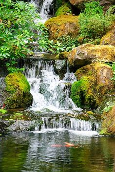 Japanese Ponds Designs Waterfall | Diego Re › Portfolio › Coy Pond Waterfall