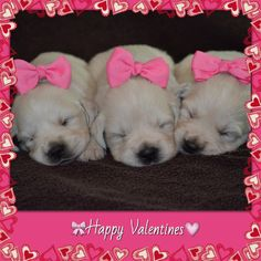valentine puppy images