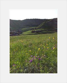in der Arena Wallis, Bergen, Vineyard, Flora, Outdoor, Alps, Nature, Outdoors, Vine Yard