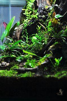 Tropical Terrariums, Cool Fish Tanks, Moss Garden, Vivarium, Plants, House, Design, Terrariums, Home