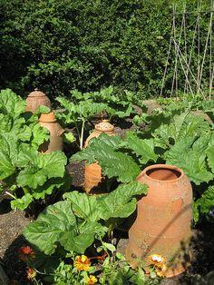 rhubarb patch with rhubarb forcers Potager Garden, Garden Pests, Edible Garden, Vegetable Garden, Garden Landscaping, Garden Tools, Garden Ideas, Permaculture, Garden Cloche