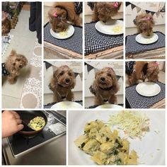 2016年3月7日(月)  本日2回目  今日の夜ご飯は長男くんが作ってくれたよ お友達のお家で食べさせてもらったご飯ピザ もう少しカリカリにした方が良かったかな Cocoさん喜んでパクパク 写真撮るより食べるの早い早い ペロンチョしたりʾʾ キャベツをお鼻につけままだったり(笑) お皿ペロペロ完食してくれました  #dog#トイプー#7dogdays#ふわもこ部#可愛い#dogstagram#instadog#親バカ部#トップノット#愛犬#dog#トイプードル部#トイプードルレッド#ig_dogphoto#いつも一緒#happy#ワンコなしでは生きていけません会#ワンコご飯#完食#pecoいぬ部#おでか犬#poodle#cutedogs#instatoypoodle#todayswanko#lovedogs#west_dog_japan   記録用 コメントclose.   :....:'()':.. ..:  by re_ri_ma