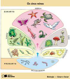 Caracteristicas del reino vegetal yahoo dating