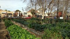 "With people stuck at home during the pandemic, San Diego launched a website with information and assistance on how to become a successful ""urban farmer."" Organic Vegetables, Growing Vegetables, Raising Bees, Small Vegetable Gardens, Urban Farmer, California City, Climate Action, Compost, Organic Gardening"
