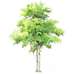 Watercolor Plants, Watercolor Landscape Paintings, Easy Watercolor, Landscape Sketch, Landscape Design, Architectural Trees, Plant Texture, Tree Sketches, Laser Art