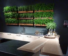 herb green wall kitchen - Google Search
