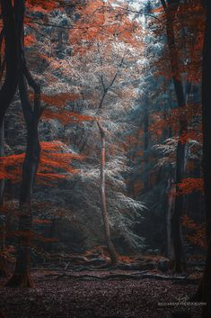The moor around the corner provided some great shots Forest Mural, Magic Forest, Great Shots, Beautiful Landscapes, Mother Nature, Art Photography, Beautiful Places, Scenery, Canvas Ideas