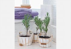 Três vasinhos com lavandas foram dispostos ao lado da janela deste banheiro para perfumar a área e dar um toque de verde  Evelyn Müller / Casa e Jardim