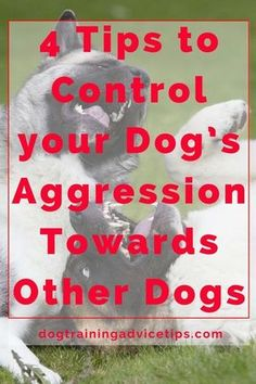 4 Tips to Control your Dog's Aggression Towards Other Dogs - Dog Obedience Training Tips - Hunde Puppy Obedience Training, Basic Dog Training, Dog Training Videos, Training Your Puppy, Training Dogs, Training Schedule, Potty Training, Pitbull Training, Crate Training