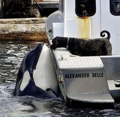 The amazing orca named Luna and his furry friend