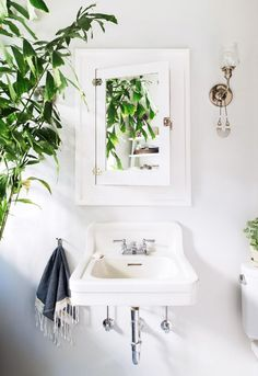 Indoor plant in a serene white bathroom