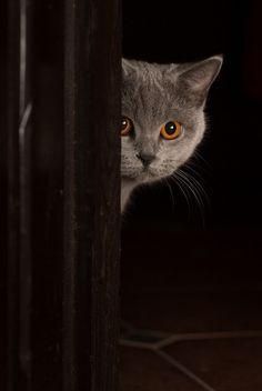 Eu estou vendo você...