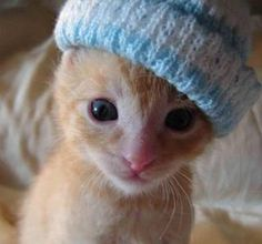 This is what I imagine all kittens in Canada look like.