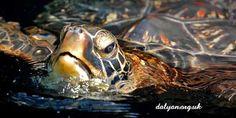 turtle, tartarughe, oceano, ocean, sea, marine creatures, sea creature, creature marine, abissi, profondità, under the sea, sotto al mare, colori, fondale, animali, green, verde, sea life, vita marina,