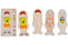 Body Amazing - Boy - Discovery Toys. A fun introduction to anatomy! Explore the key layers of the human body with this beautifully illustrated 5 layer wood puzzle. Each layer, when assembled, reveals a key part: Bones, Organs, Muscles, Skin/Hair, and Body.