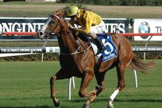 Miracles of Life (AUS) 2010 Ch.f. (Not A Single Doubt (AUS)-Dazzling Gazelle (AUS) by More Than Ready (USA) 1st ATC Challenge S (AUS-G2,1000mT,Randwick), SAJC Robert Sangster S (AUS-G1,1200mT,Morphettville) (photo: Racing and Sports)