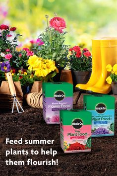 Rhododendron Plant, Health Care Reform, Summer Plants, Planting Roses, Flower Food, Organic Gardening Tips, Container Flowers, Annual Plants, Companion Planting
