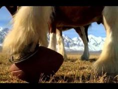 Budweiser Clydesdales commercial -