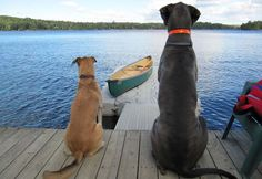 Cottage dogs