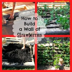 How to Build a Wall of Strawberries. -be sure to safely secure the pallet either against a wall or with stakes to prevent from falling or injuring anyone. -also found that slightly angling the pallet backward allowed for more even watering.