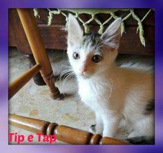 Tip Tap tap tip TIP TAP - http://hormiga.it/tip-tap-tap-tip-tip-tap/