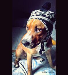 my dog, Elijah.
