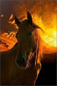 Beautiful Horse, Beautiful  golden orange Sunset. Please also visit www.JustForYouPropheticArt.com for colorful, inspirational art and stories and like my  Facebook Art Page  at www.facebook.com/Propheticartjustforyou Thank you so much! Blessings!