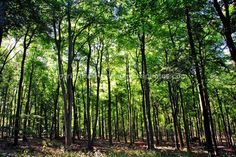 Blackwood Forest, Micheldever Hampshire photograph picture print by AE Photo