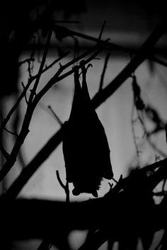 Slobbering Darkness