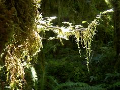 sun in the forest, NZ