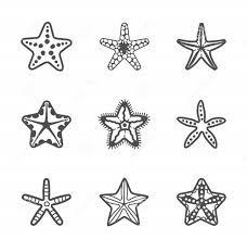 Resultado de imagem para desenhos estrela do mar