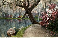 Magnolia Plantation, Charleston, SC