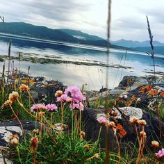 #flowers #flower #beautiful #beautifulflowers #norwaytravel #norway #norge #photography #photos #skylovers #sky  #blue #bluesky #meadow #lea #water #norwegiannature #view #beautifulplaces