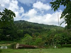 Ausblick in den Dschungel auf Koh Samui in Thailand.