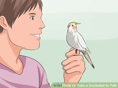 How to Train a Cockatiel to Talk. Cockatiels can make great pets and teaching them to talk can be a great way for you and your pet to bond. A talking cockatiel repeats syllables, making a robotic replication of words or noises you say to. Diy Cockatiel Toys, Cockatiel Care, Diy Bird Cage, Bird Cages, Parrot Cages, Parrot Pet, Parrot Toys, Diy Bird Toys, Pet Birds