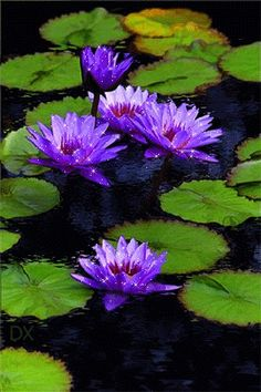 Раскачивающиеся кувшинки и листья на воде