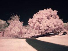 Path to Cotton Candy by La-Vita-a-Bella on DeviantArt