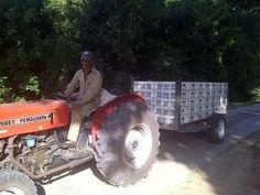 Harvest 2013 -  Saronsberg Cellar Tulbagh