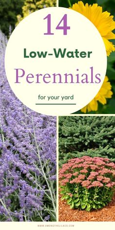 14 Low-Water Perennials for Your Yard and Garden - Get some garden ideas with this list of 14 perennials that are drought-tolerant! Amazing Gardens, Garden Landscape Design, Plants, Drought Tolerant Garden, Low Water Plants, Drought Tolerant Perennials, Perennials, Garden Planning, Perennial Garden