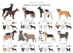 Neapolitan Mastiff – A Massive Dog Distinct in Looks and Personality Mastiff Puppies, Belgian Dog, Massive Dogs, Neapolitan Mastiffs, Dog Breeds List, Tibetan Mastiff, English Mastiff, War Dogs