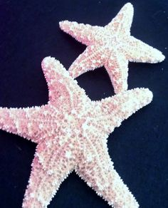 Starfish ocean Beach wedding tropical wedding by msformaldehyde, $15.00
