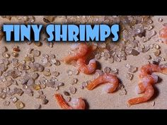 ▶ Quick Tutorial; Miniature Shrimps - Polymer Clay - YouTube
